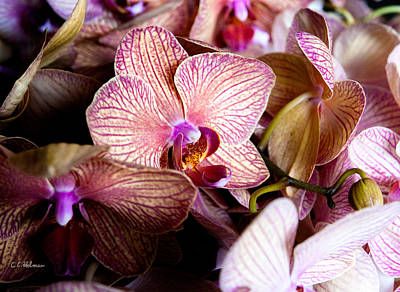 Photograph - Orchid IIi by Christopher Holmes