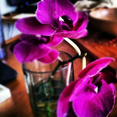 Orchids Photograph - #orchid by Josh Krueger