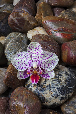 Orchid On Wet Rocks Art Print