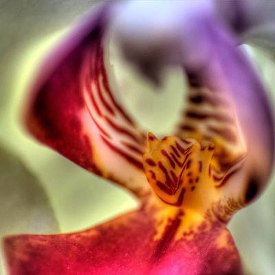 Orchids Photograph - #orchid #orchids #flowers #macro by Omar Colon