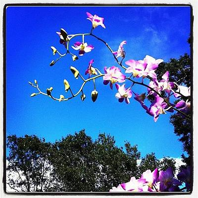 Orchids Photograph - #orchid #orchids #sky #orchidsinthesky by Amber Baby