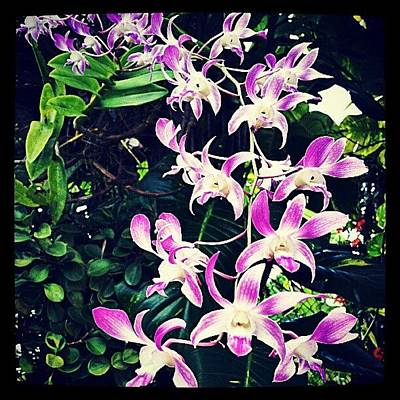 Orchids Photograph - #orchid #orchidshow #orchids #flower by Tania Torres