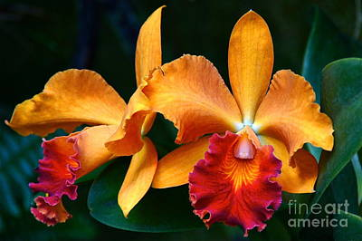 Photograph - Orchid Passion by Byron Varvarigos
