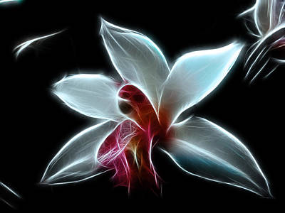 Photograph - Orchid by Fiona Messenger