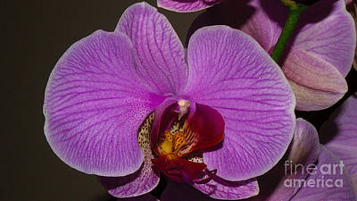 Photograph - Orchid Profile by Mareko Marciniak
