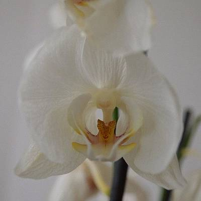 Orchids Photograph - #orchid by Raman Aharodni