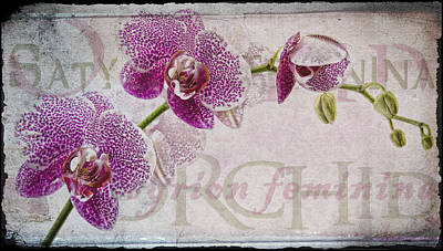 Photograph - Orchid by Sandra Sigfusson