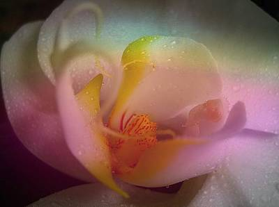 Orchid Splendor Art Print by Shirley Sirois