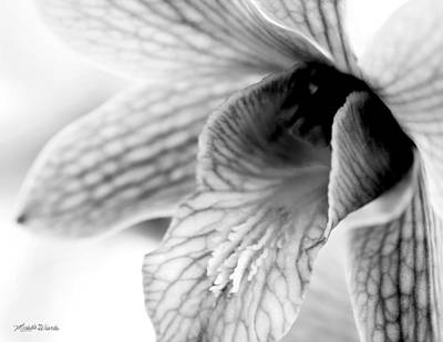 Photograph - Orchid Study 2 by Michelle Constantine