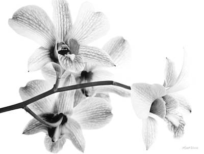 Photograph - Orchid Study 4 by Michelle Constantine