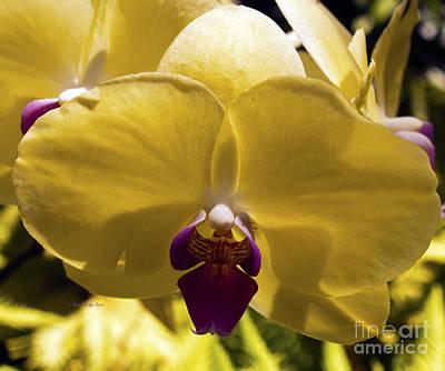Photograph - Orchid Study Vi by Patricia Griffin Brett