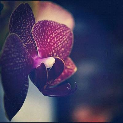 Orchids Photograph - #orchid by Sydney Thibault