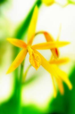 Orchid Vi Art Print by Floyd Menezes