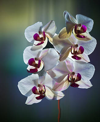 Photograph - Orchid by Vladimir Kholostykh