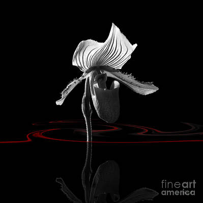 Digital Art - Orchide With Mirroring 2 by Johnny Hildingsson