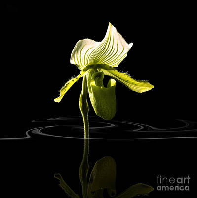 Digital Art - Orchide With Mirroring by Johnny Hildingsson