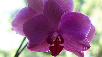 Photograph - Orchidea by Mareko Marciniak