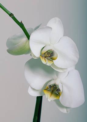 Orchidee Art Print by Falko Follert