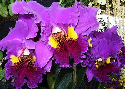 Photograph - Orchids - Purple Trio by Kerri Ligatich