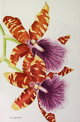 Painting - Orchids - Tiger Stripes  by Kerri Ligatich