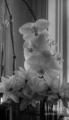 Photograph - Orchids 2 by David Bearden