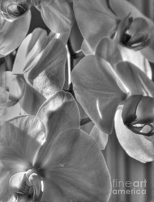 Photograph - Orchids 3 by David Bearden