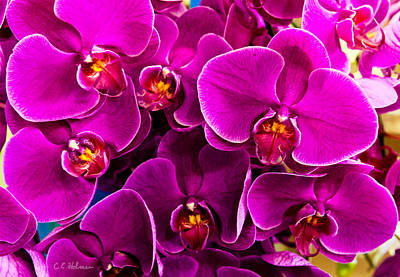 Photograph - Orchids A Plenty by Christopher Holmes