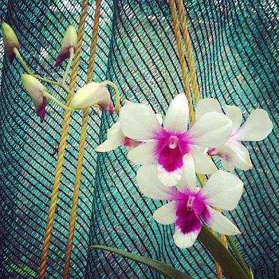 Orchids Photograph - Orchids by Aron Muralidhar