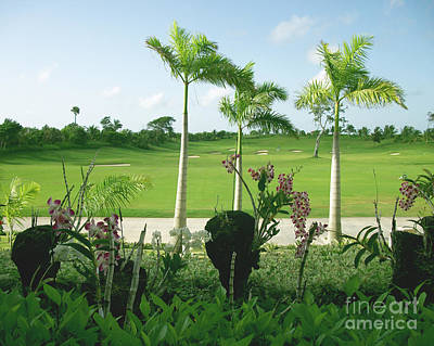Photograph - Orchids At Iberostar Golf Course In Punta Cana Dr by Heather Kirk