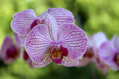 Photograph - Orchids by Diana Haronis