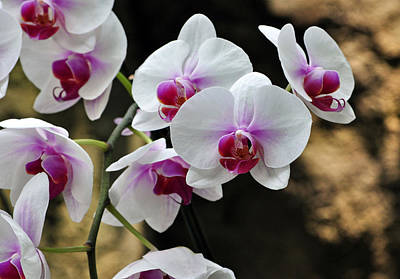 Orchids For Your Day Art Print by Timothy Johnson
