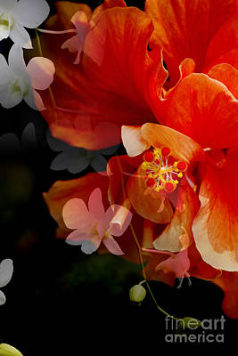Photograph - Orchids Haunting Hibiscus  by Nola Lee Kelsey