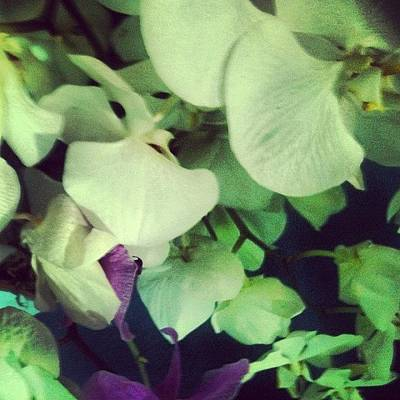 Bouquet Wall Art - Photograph - Orchids by Lucie Lacava