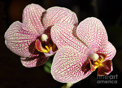 Orchids Art Print by Luke Moore