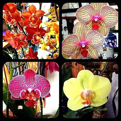 Orchids Photograph - #orchids #orchid #4orchids by Jim Neeley