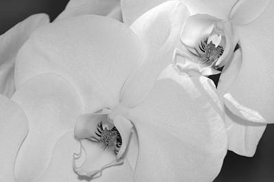 Photograph - Orchids by Sandra Bronstein