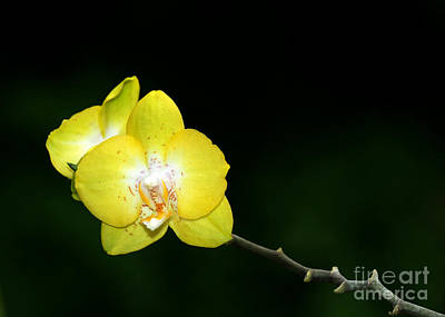 Florida Flowers Photograph - Orchids To The Left by Sabrina L Ryan