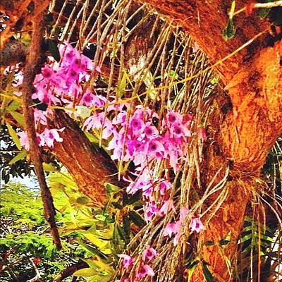 Orchids Photograph - #orchids #tree #nature by Ivelaida Rivera