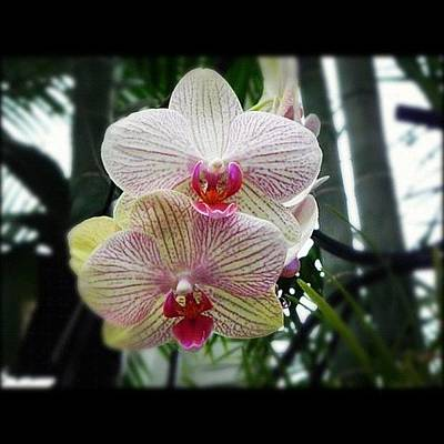 Orchids Photograph - #orchids by Vickie ODell