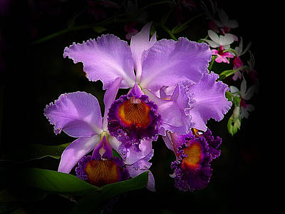 Orchidstral Beauty Art Print by Blair Wainman