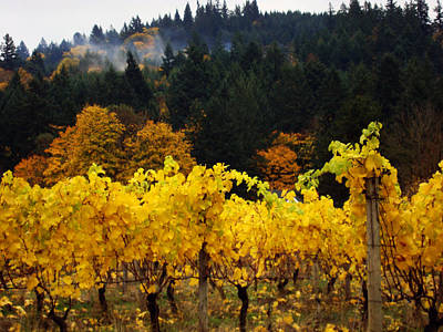Photograph - Oregon Autumn Vineyards by Glenna McRae