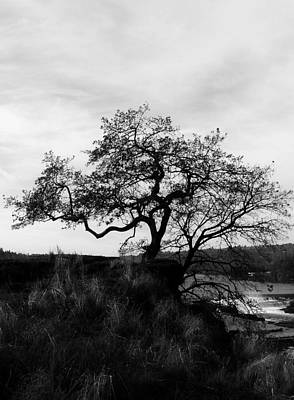 Photograph - Oregon City Tree by Steven Loyd