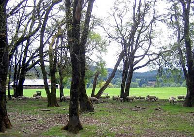 Photograph - Oregon Sheep Farm by Will Borden
