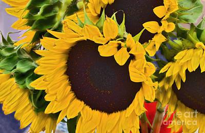 Photograph - Organic Sunflowers     by Alexandra Jordankova