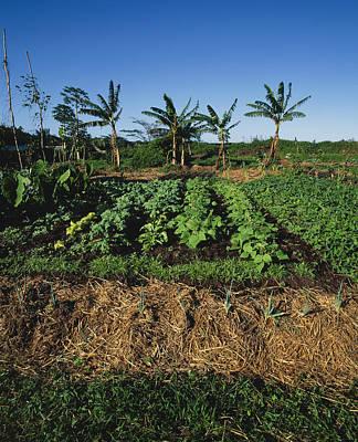 Organic Vegetable Garden, Hawaii Art Print by G. Brad Lewis