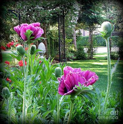 Art Print featuring the photograph Oriental Poppies by Tanya  Searcy