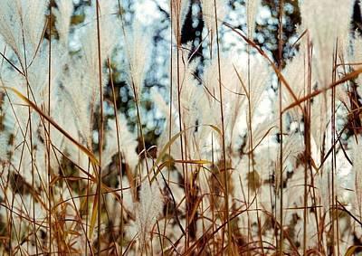 Photograph - Ornamental Grass by Bridget Johnson