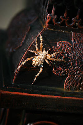 Spider Photograph - Ornamental Orb Weaver by Christine Gauthier