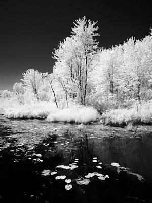 Photograph - Oro Creek by John Jacquemain