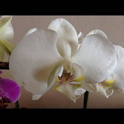 Orchids Photograph - #orquídea #orchid #flor #flower by Diogo Rocha